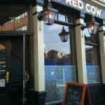 old red cow 2